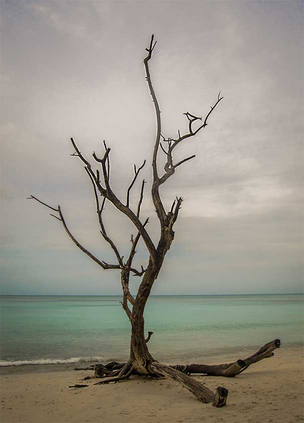 Lonely tree standing tall on a sea shore